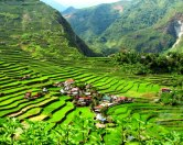 banaue-rice-terraces1 - Copy