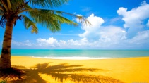 Coconut-Tree-at-Beach-Nature-Wallpaper - Copy