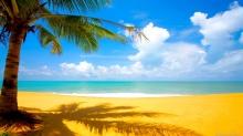 Coconut-Tree-at-Beach-Nature-Wallpaper - Copy